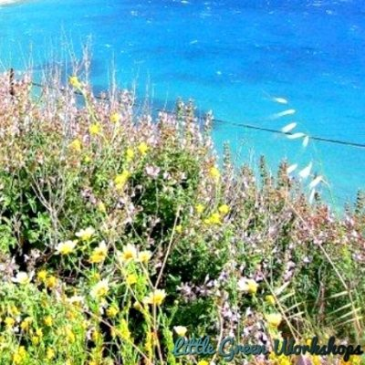 Herbs by the sea fragrance oil