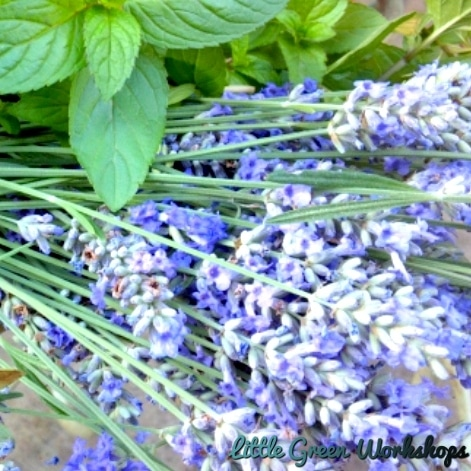 Lavender and Mint Fragrance Oil