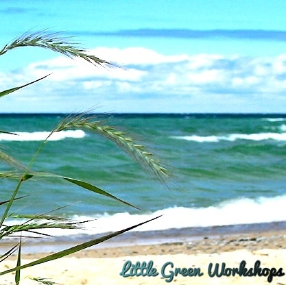 Ocean Breeze Fragrance Oil