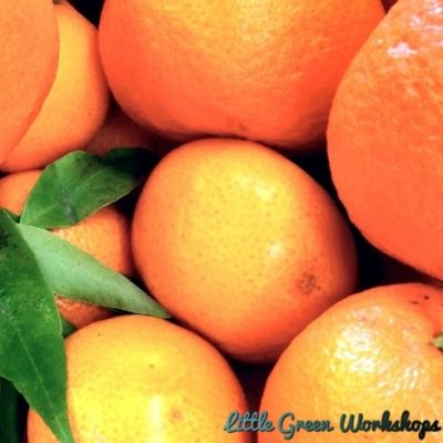 Tropical Tangerine Fragrance Oil