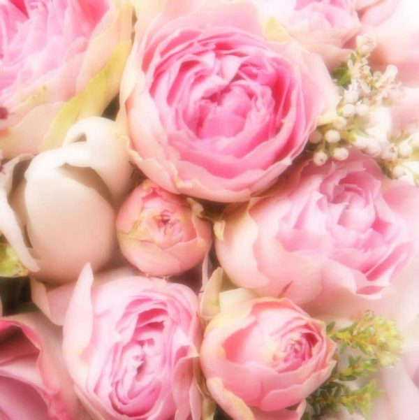 Peony Rose Fragrance Oil