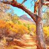 Australian bush fragrance Oil