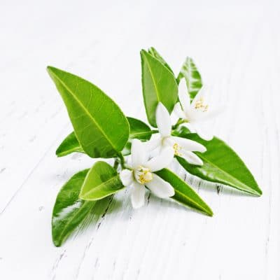 Neroli and White Musk Fragrance Oil